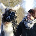 Auf Tuchfühlung mit den Venn-Lamas